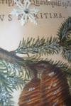 Pine Cone Tag